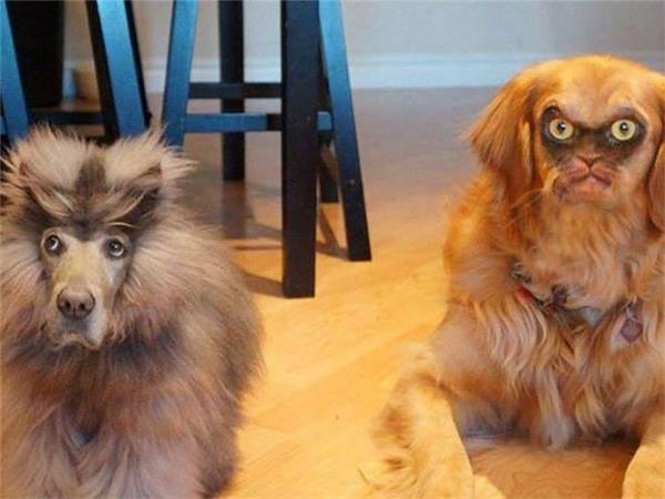 Đây là một dạng đột biến chó mèo mới được phát hiện.