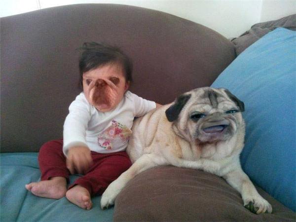 """Tình bạn thân thiết giữa """"cẩu nhi"""" và chú chó móm."""