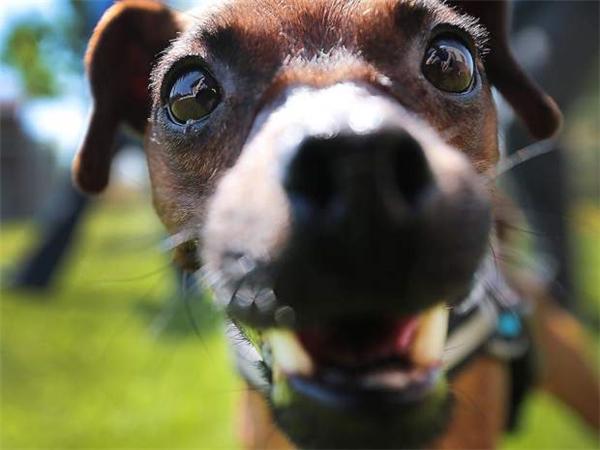 Chú chó nhỏ bị dán chặt mõm bằng băng dính kêu cứu trong vô vọng