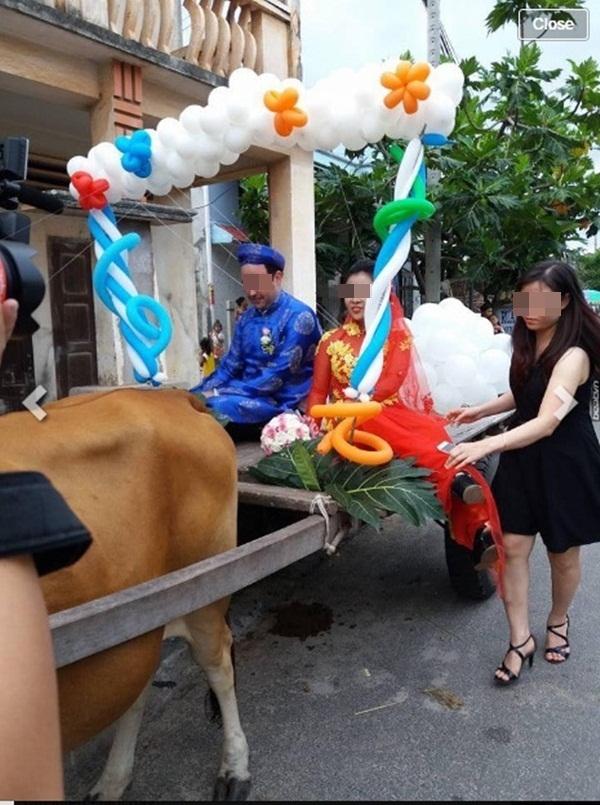 """Chàng Tây đón cô dâu Việt bằng """"siêu xe bò kéo"""" gây bão cộng đồng mạng"""