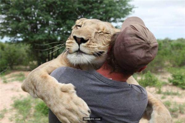 Mỗi khi Valentin đến khu bảo tồn,chú sư tử đều vui mừng nhảy ra ôm anh như hai người bạn thân thiết lâu ngày gặp mặt.