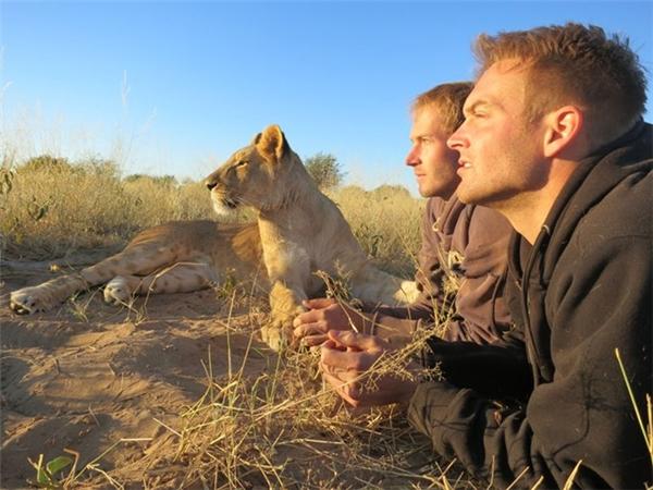 Chàng trai trẻ cứu chú sư tử bị bầy đàn bỏ rơi và cái kết bất ngờ