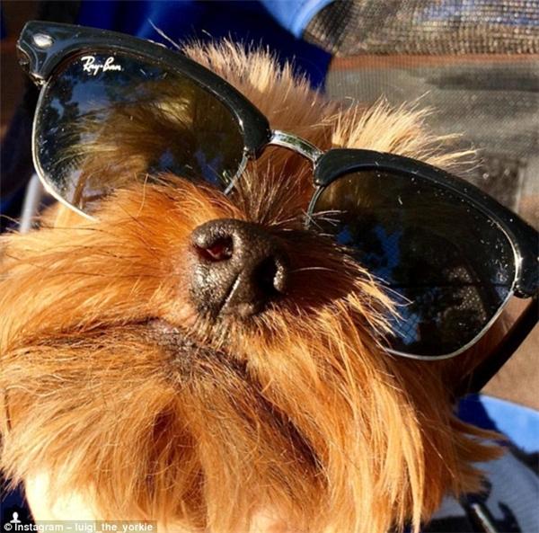 """Qủa kính mới tậu làm anh đây trông """"cool"""" khủng khiếp!(Ảnh: Instagram)"""