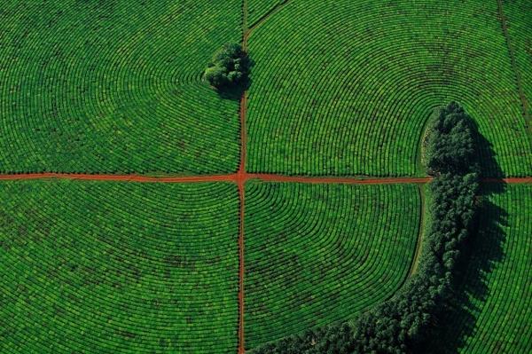 10. Hình ảnh một phần của đồn điền trà ở tỉnh Corrientes, Argentina do nhiếp ảnh gia Yann Arthus Bertrand ghi lại.