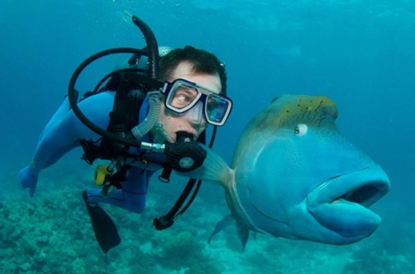 19. Anh chàng này cứ theo mình làm gì nhỉ? Hình ảnh thú vị này do một thợ lặn ghi lại khi lặn xuống biển ở Australia.