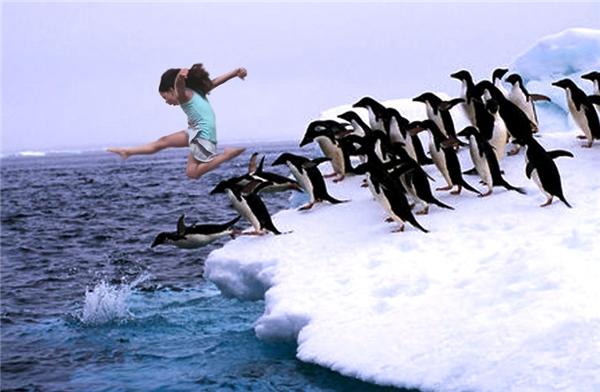 Callia tựdo bay nhảy cùng bầy chim cánh cụt.