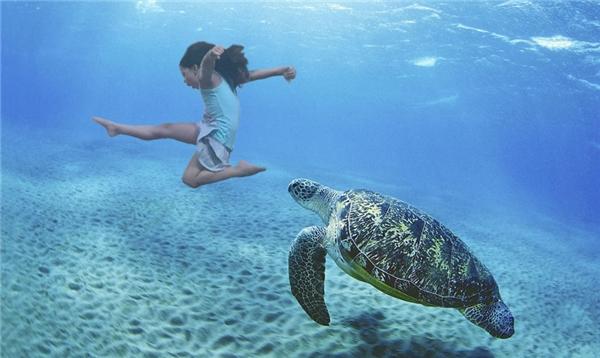 Cùng rùa biển khám phá đại dương xanh.