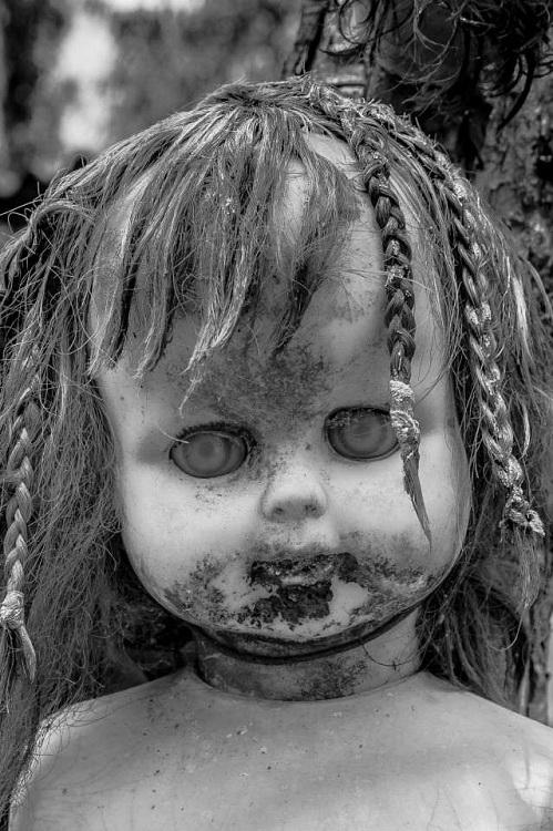 Côn trùngbò lổm ngổmtừmồm, mắt của nhiều con búp bê.