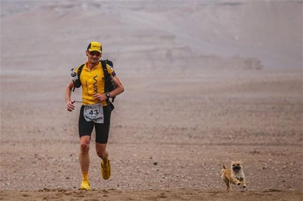 Một cô chó đi lạc đã chạytheo Dion trong cuộc đua marathon qua sa mạc.
