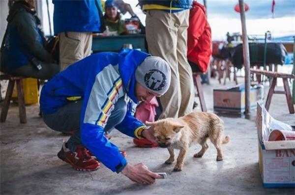 Cảm động cô chó chạy marathon 160km để xin được nhận nuôi