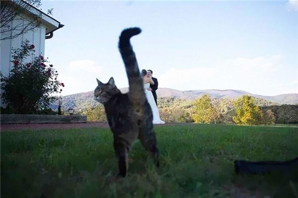 Thế giới này sắp bị loài mèo tụi tui thống trị rồi, lo chụp những bức ảnh cuối cùng của loài người đi!(Ảnh: Internet)