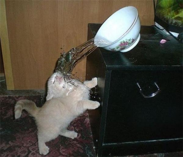 Dựlén uống vụng 1 tí nước dừa mà ai dè... được tắm nước dừa luôn.