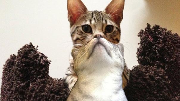 Nhà nuôi 2 con mèo mà sao lúc chụp hình lạichỉ còn1 con thôi vậy?