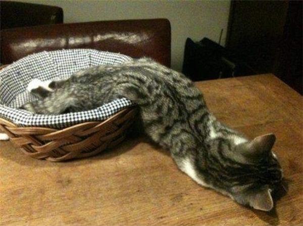 Đó là khi bạn phát hiện ra mèo mình nuôi là loài không xương.