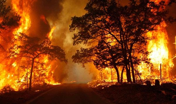 Con người sẽ là một trong những sinh vật đầu tiênphải hứng chịu hậu quả của tình trạng nhiệt độ tăng kỉ lục.