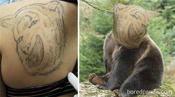 Đây là con gấu có nụ cười nham hiểm nhất kể từ khi khai thiên lập địa.