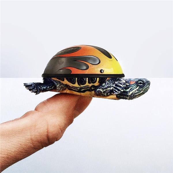 Vì tình hình giao thông nguy hiểm nên rùa ta phải đội mũ bảo hiểm trên lưng luôn nè.