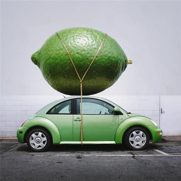 Quả chanh khổng lồ phải dùng ô tô mới chở nổi.