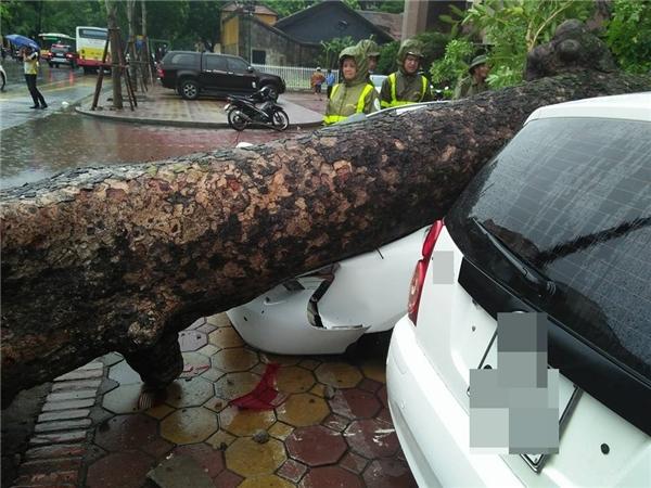 Chiếc xe ô tô con bị cây đổ chèn nát.