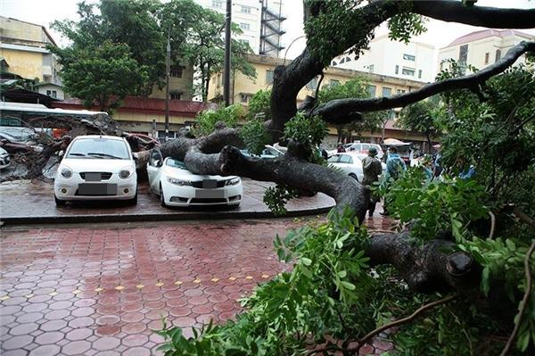 Chủ xe may mắn thoát nạn khi ra khỏi xe ít phút trước khi cây đổ xuống.