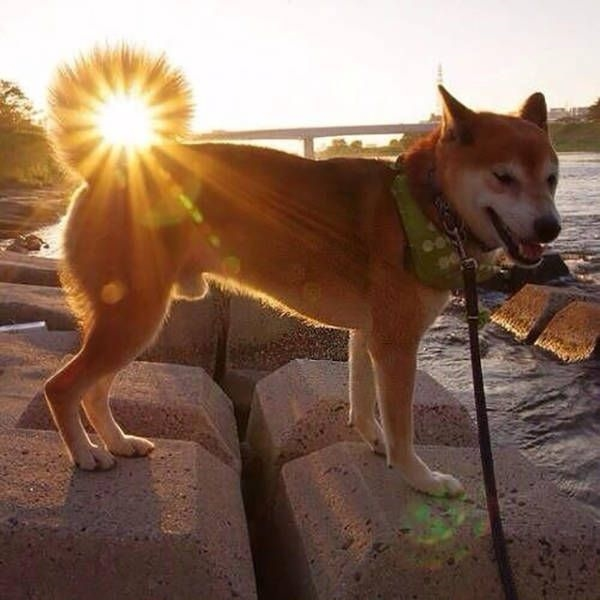 7. Chiếc đuôi cong của chú chó dưới góc chụp độc đáo này đã biến thành mặt trời mất rồi.