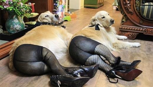 Chị em cún đang nô nức yến anh để đi trẩy hội tối nay.