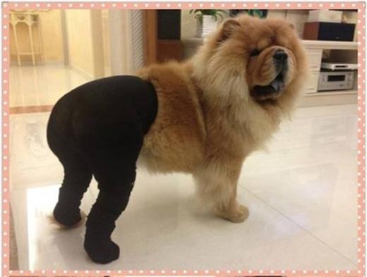 Người ta thì quyến rũ, còn em mặc quần tất thì ngố như thế này đây.