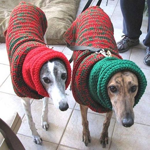 Thế là hai chú cún đã có một mùa đông không lạnh rồi nhé.