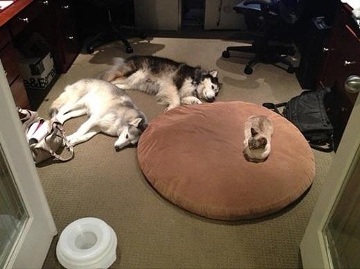 """""""Các ngươi hãy nằm xuống để ta ban cho sức mạnh của thần mèo"""""""