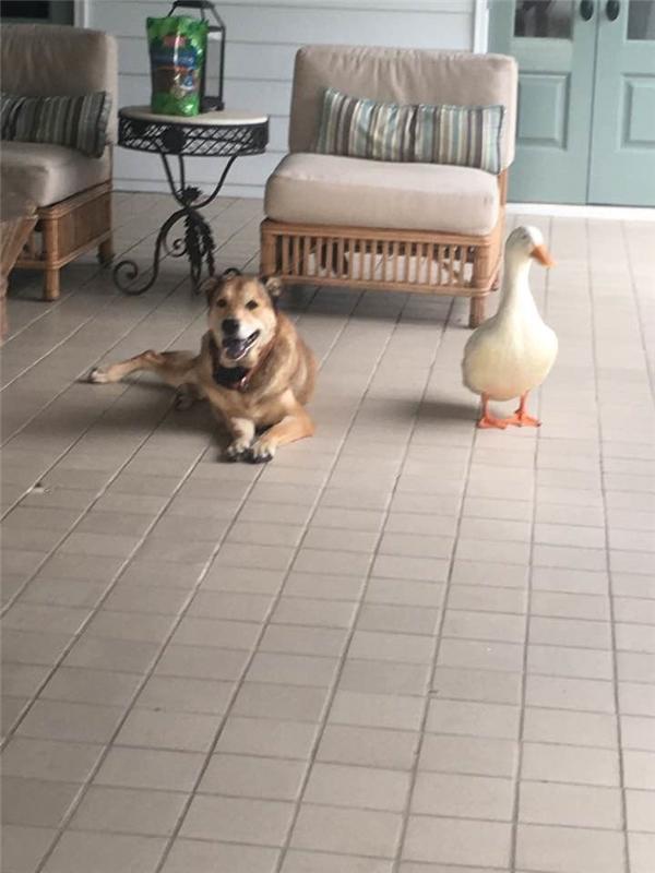 Hai người bạn khác loài giờ đây lúc nào cũng có nhau.(Ảnh: Facebook)