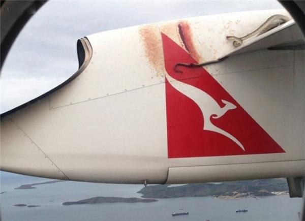 Đang vi vu ngắm cảnh trên máy bay bỗng chết ngất vìthấy con rắndài loằng ngoằngbò ngang qua.