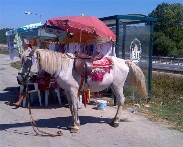 Giả sử xe buýt đến trễ quáthì có thể mượn ngựa để đi không nhỉ?