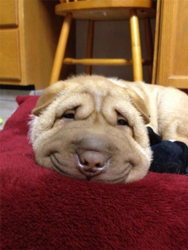 """3. Hạnh phúc sẽ không mỉm cười với những con người """"lười thả thính""""."""