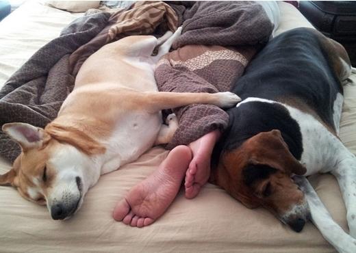 Khi ở cùng nhà với cún, điều đó có nghĩa là bạn cũng sẽ ngủ cùng giường với chúng.