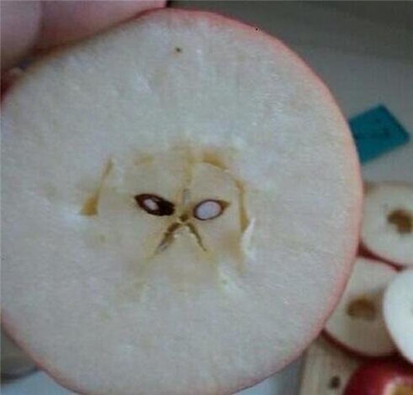 Con quái vật trong quả táo nó đang bực mình rồi đấy, bạn mà cắn vào một miếng, nó sẽ chui tọt vào bụng bạn rồi phá thủng bụng bạn chui ra đấy.