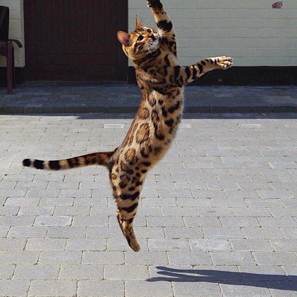 Kinh ngạc trước chú mèo nhà