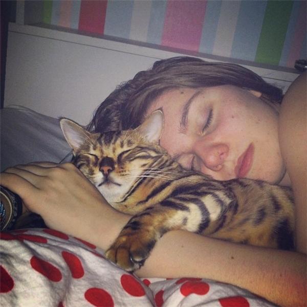 Thế nhưng Thor vẫn là một chú mèo rất ngoan ngoãn và biết điều, thích nằm gọn trong vòng tay cô chủ ngủ ngon lành.