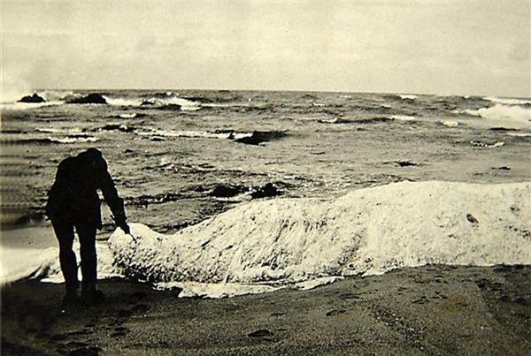 Một người đàn ông đang dùng cành cây chọc vào xác thủy quái Trunko trên bãi biển Nam Phi.