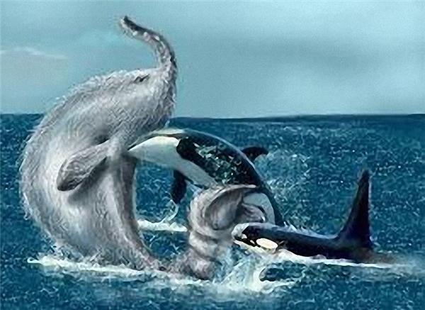 Hình vẻ miêu tả cảnh thủy quáiTrunko đối đầu với hai cá voi sát thủ
