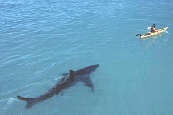 Cô đừng theo tui nữa. Tui đã thề với nắng với biển là tui không yêu cô rồi mà!?