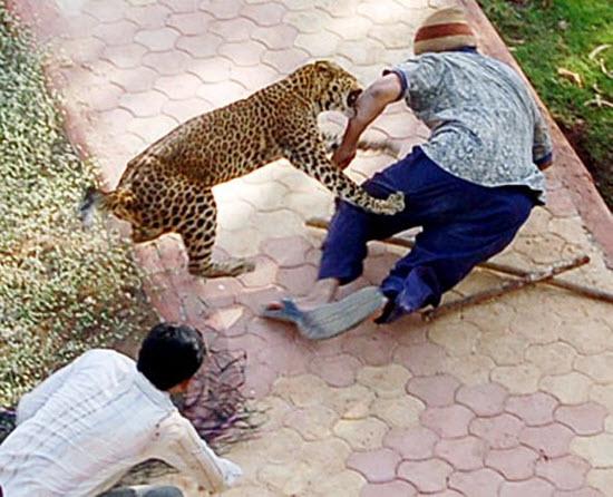 """Hình ảnh chứng minh """"mèo"""" là loài động vật vô cùng nguy hiểm"""