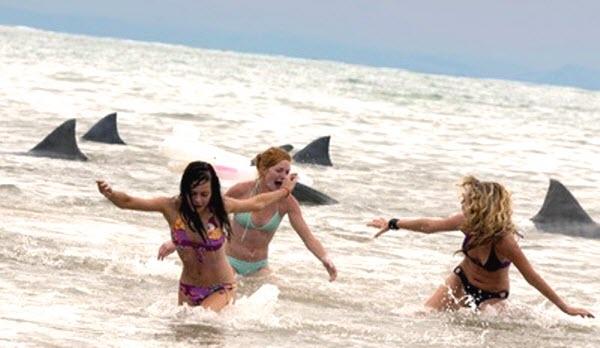 Cá mập à, đi cưa gái thế này thì thất bại thảm hại rồi.