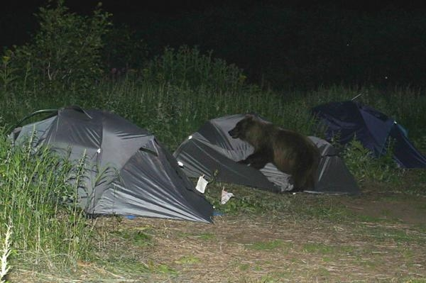 Bạn có bao giờ cảm thấy như bị nghẹt thở khi đang ngủ? Nếu lúc đó bạn đang đi cắm trại thì 99% là bị... gấu đè đấy.