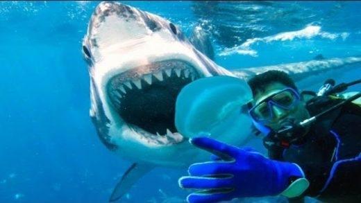 """Biểu cảm của chú cá mập như thể """"A, chụp hình! Sao không báo trước?"""""""