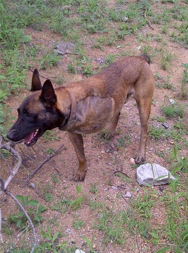 Shaya mất một chân khi đang làm nhiệm vụ.(Ảnh:Transfrontier Africa)
