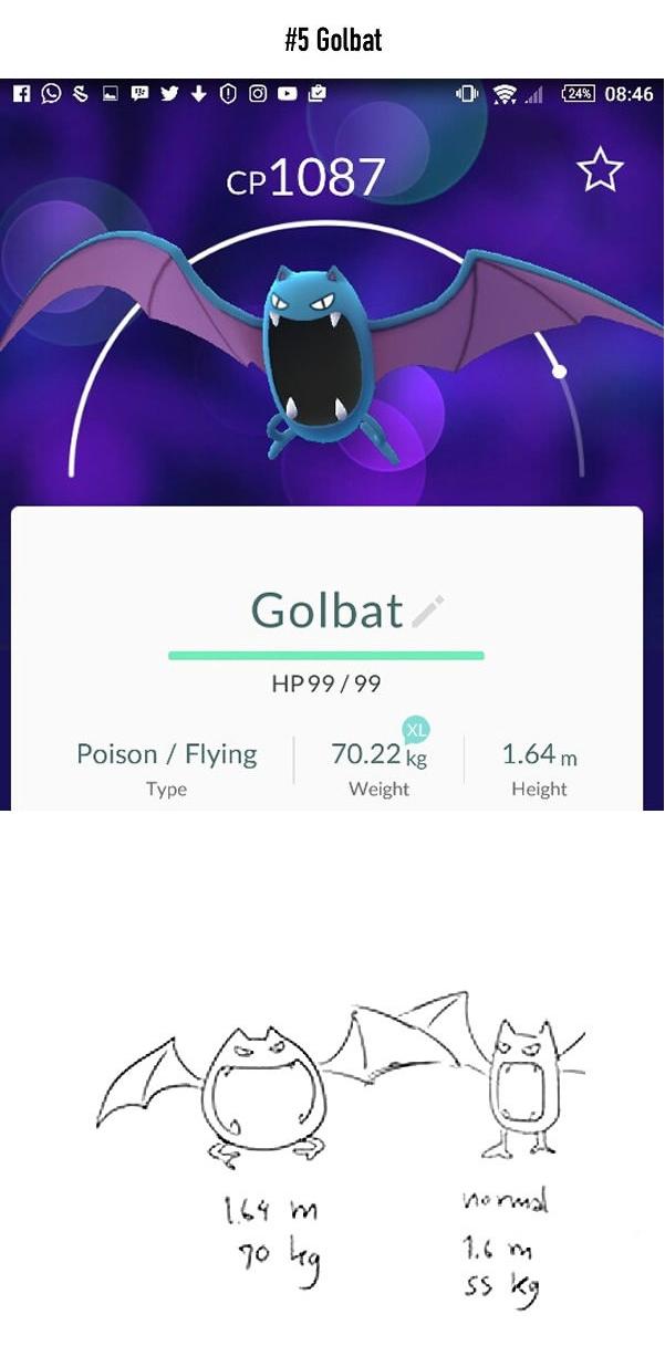 Golbat hóa ra lại là một con dơi béo phì với chiều cao 1,64m và cân nặng 70,22kg, và lẽ dĩ nhiên là để có thể hình lý tưởng cho việc tác chiến, cậu chàng nên giảm xuống còn 55kg.