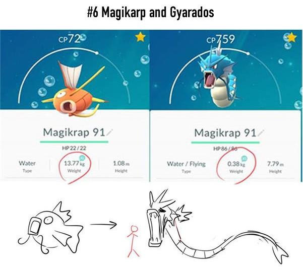 Magikarp sau khi tiến hóa thành Gyarados đã vụt dài ra một cách khủng khiếp từ 1,08m lên 7,79m trong khi cân nặng của nó lại tuột dốc không phanh từ 13,77kg xuống còn... 0,38kg. Gyarados trông chỉ như... sợi chỉ thôi sao?!