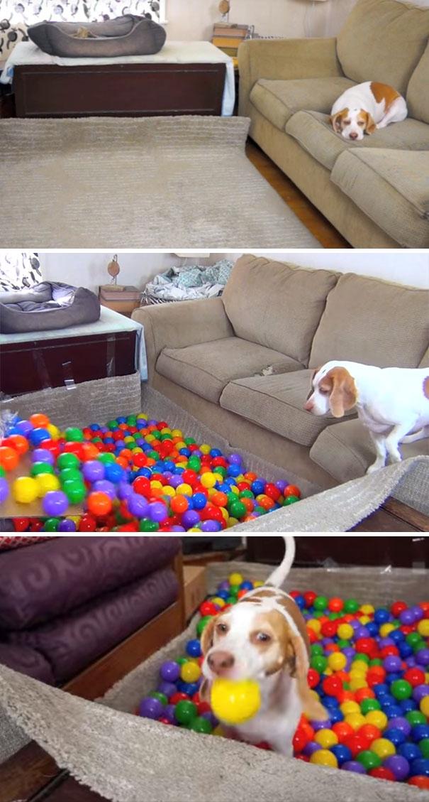 Làm ngay một khu bóng cho em ấy chơi ngay tại phòng khách nè! (Ảnh: Internet)