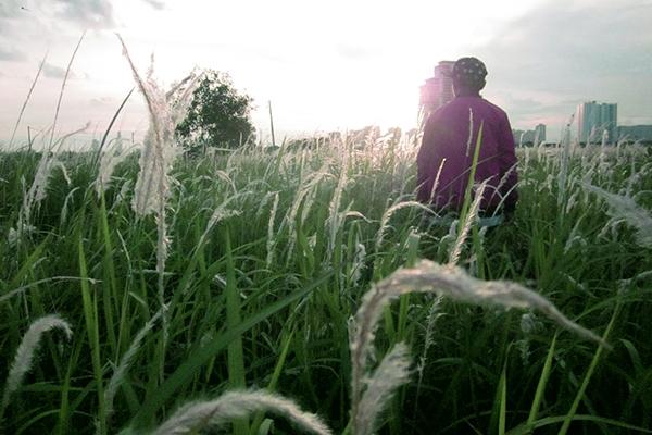 Những làn gió lay động cả đồng cỏ lau đủ làm cho bất cứ ai cũng phảicảm thấy vừa yên bình thư giãn, vừa mang một chút lạc lõng.
