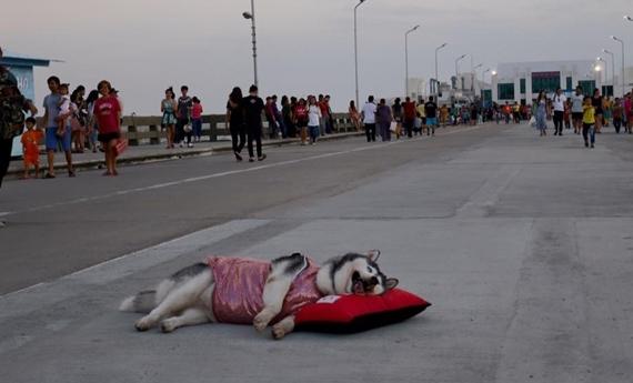Chết cười với chú chó đang nghỉ ngơi, chưa chết, chớ làm phiền